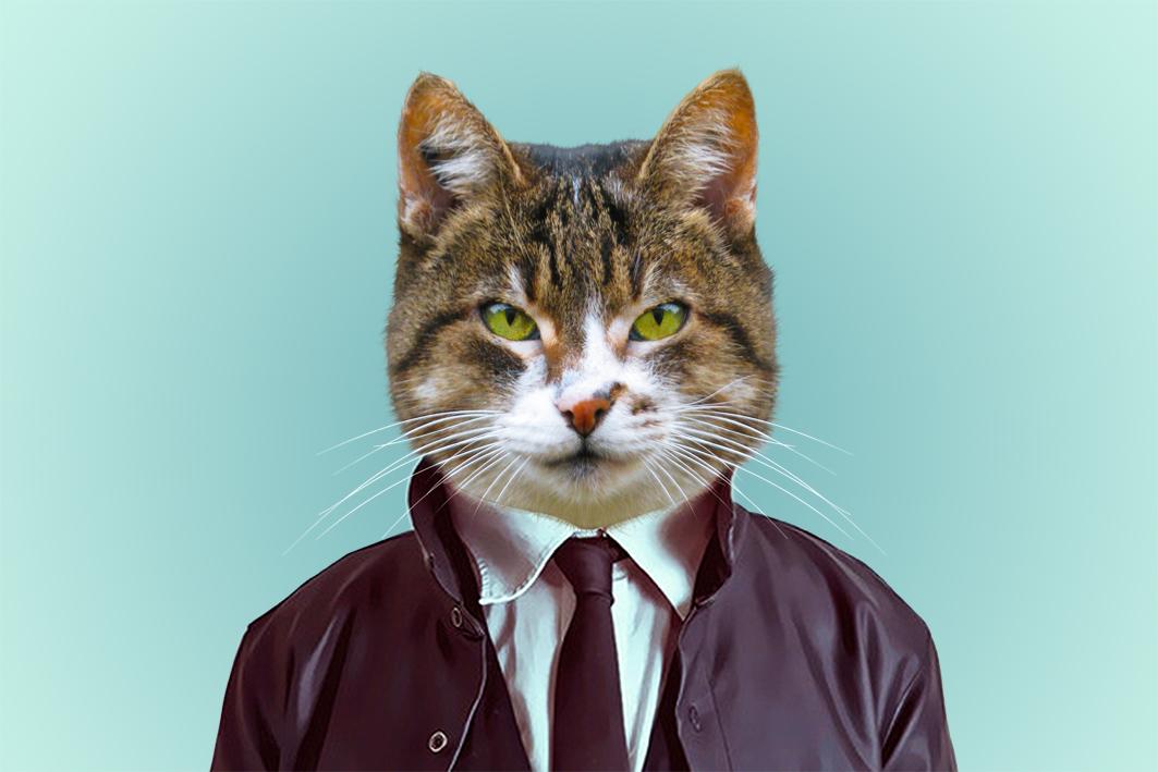 Portraits humanisés de chats